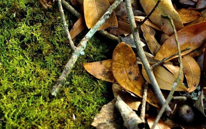 Puutarha- ja haravointijätteet